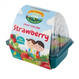 - Little Greenhouse Strawberry