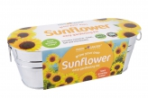 Windowsill Planter - Sunflower